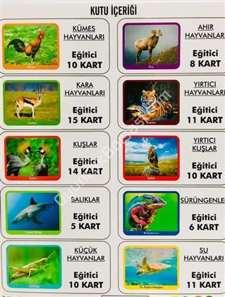 İlk 100 Hayvan Eğitici Kart ,Toptan Satış