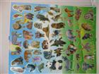 Toptan Sticker A4 Hayvanlar Model, Toptan Satış